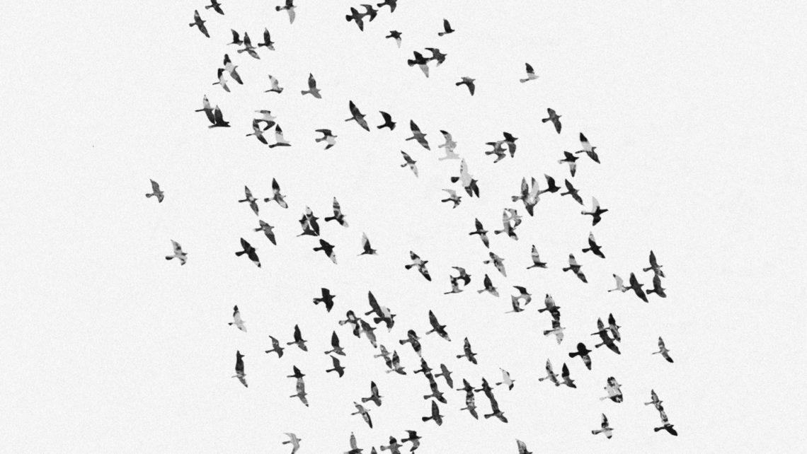 NW-Birds-Cover